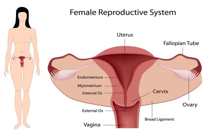 cách chữa trị tắc vòi trứng 2 bên để có thai tự nhiên